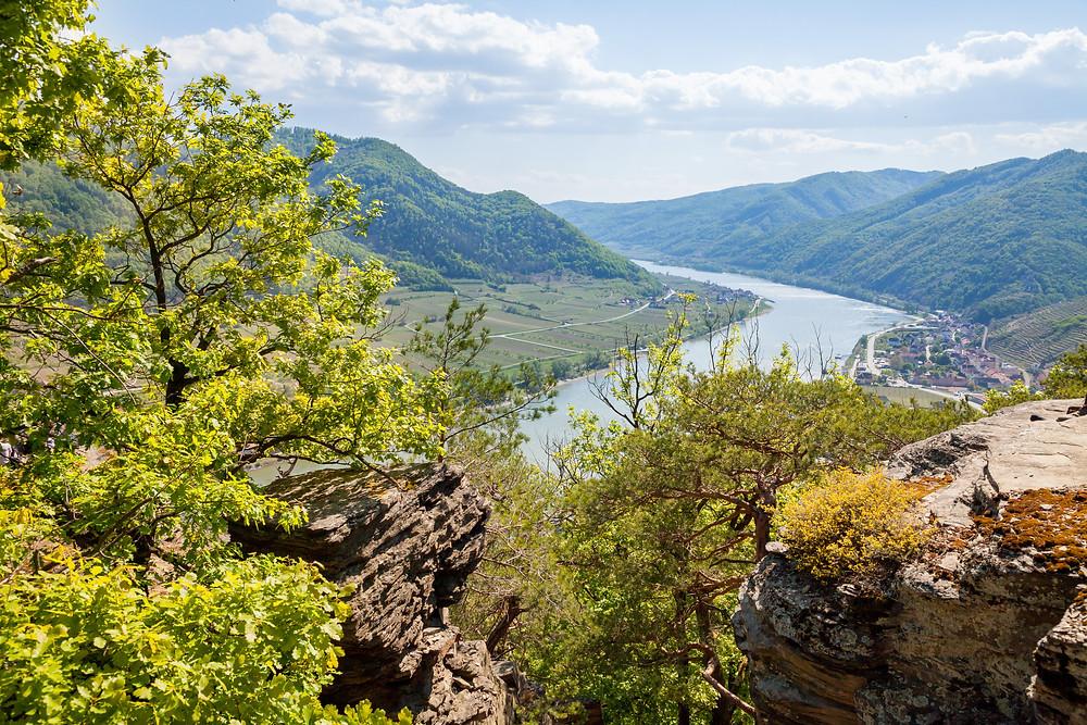Spitz an der Donau, Sankt Michael, Wachau, Höhenweg, Niederösterreich, Wandern, Wandertipp, Ausflug