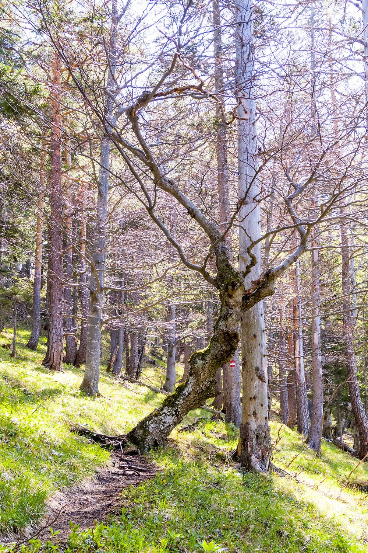 Totholz, Wald, Wildnis, Alpen, Niederösterreich, Mostviertel