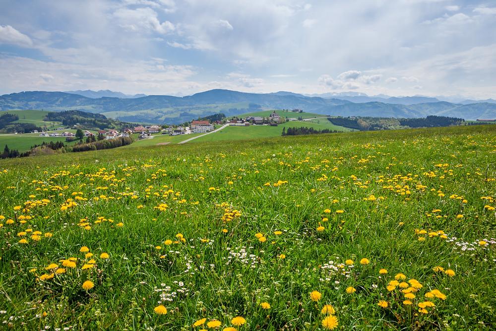 Elisabethwarte, Mostviertel, Niederösterreich, Wandern, Ausflug, Wandertipp