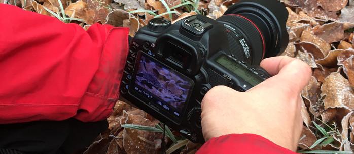 Fotografie Tipps: Die Naheinstellgrenze von Fotoobjektiven