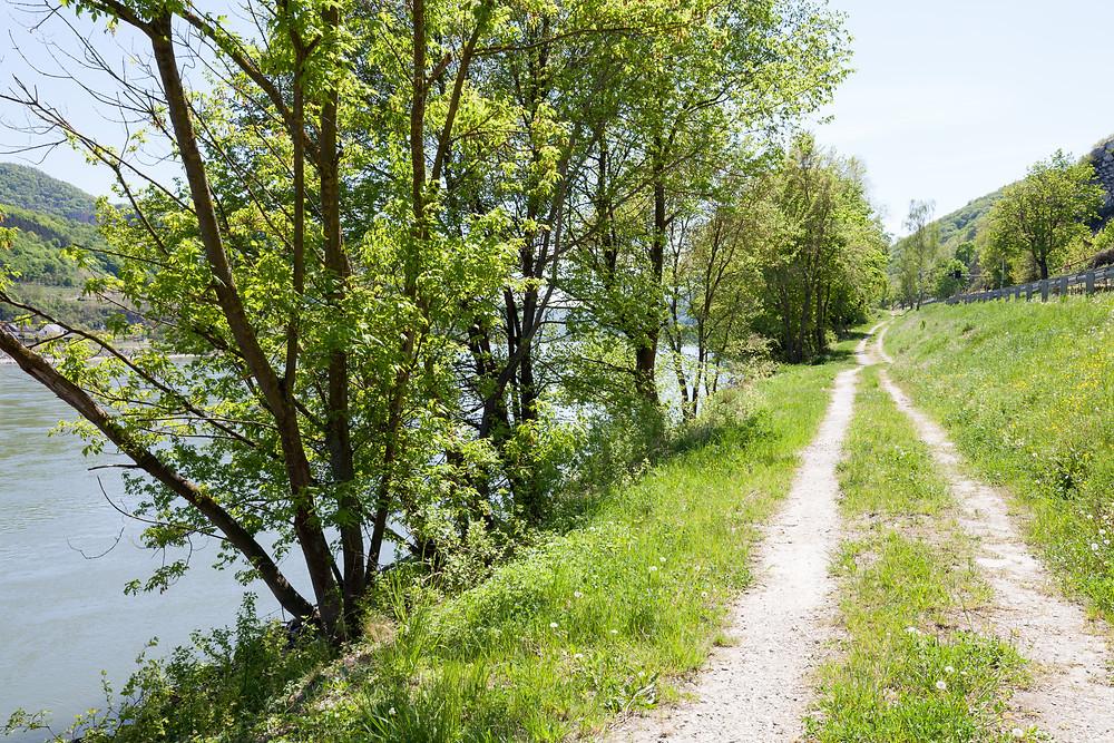 Wachau, Spitz, Donau, Treppelweg, Wandern, Ausflug, Wandertipp