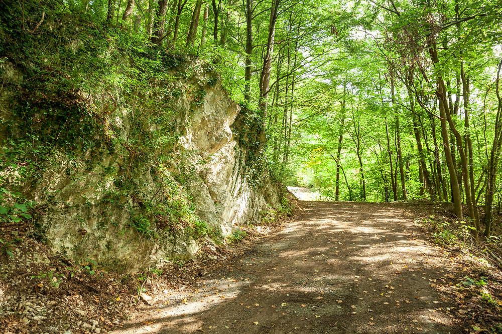 Wanderweg, Wandern, Wanderung, Wienerwald