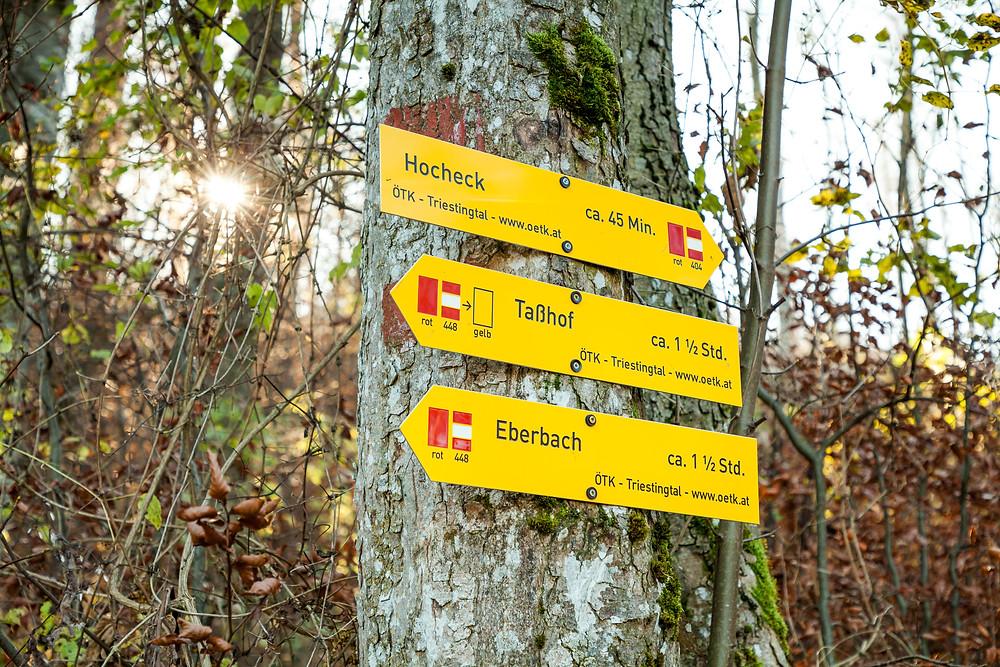Hocheck, Wienerwald, Niederösterreich, Altenmarkt an der Triesting, wandern, Wanderung, Wandertipp, Herbst, Herbstwanderung, Bergtour, Bergwanderung,