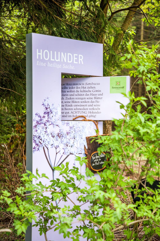 Holler, Holunder, Aubergwarte, Sonnentor, Kräuterwanderweg, Tutgut-Wanderweg, Sprögnitz, Waldviertel, Wald4tel, Niederösterreich, Wandern, Wandertipp, Ausflug