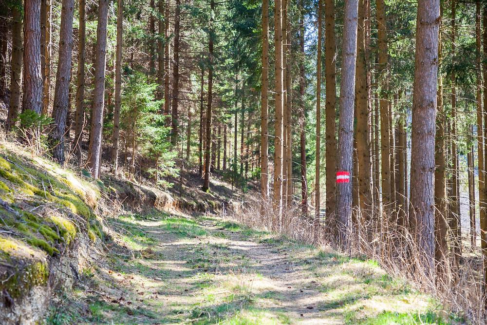 Wandern, Wanderung, Wanderweg, Nadelwald, Rappottenstein, Waldviertel, Niederösterreich