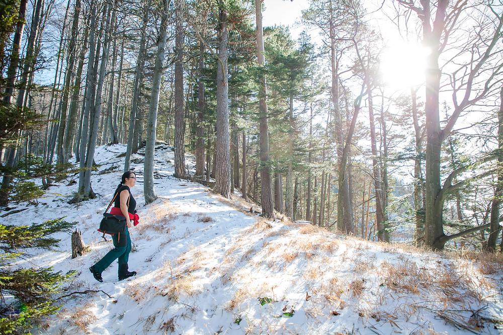 Steig, Unterberg, Ramsau, Voralpen, Niederösterreich, Wandern, Wanderungen, Winterwandern, Wanderin, Föhrenwald, Winter, Schnee, Spätwinter