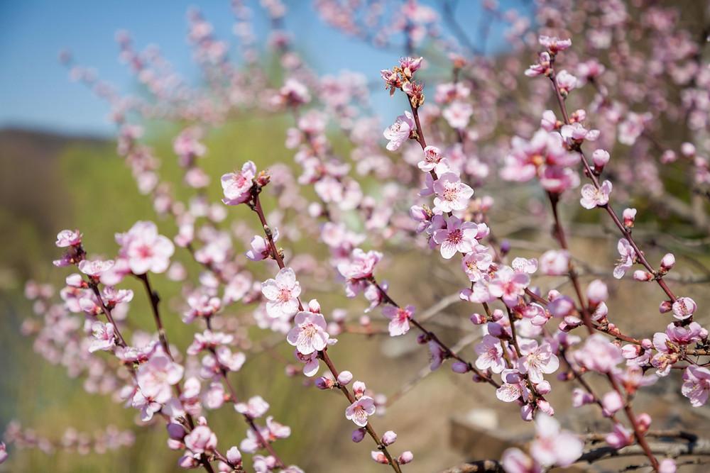 Frühling, Blüte, Knospe, Pielachtal