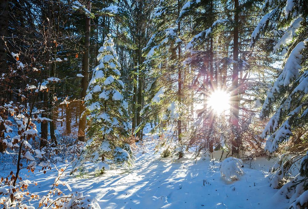 Eisenstein, Alpenvorland, Niederösterreich, Mostviertel, Traisental, Pielachtal, Türnitz, Wandern, Wanderung, Wandertipp, Winterwandern, Gipfeltour, Schnee, Winter, Panorama, Bergpanorama,