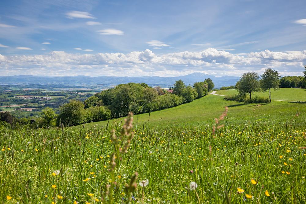 Blumenwiese, Wiese, Steinbachklamm, Nibelungengau, Waldviertel, Donau, Niederösterreich, Wandern, Ausflug, Wandertipp