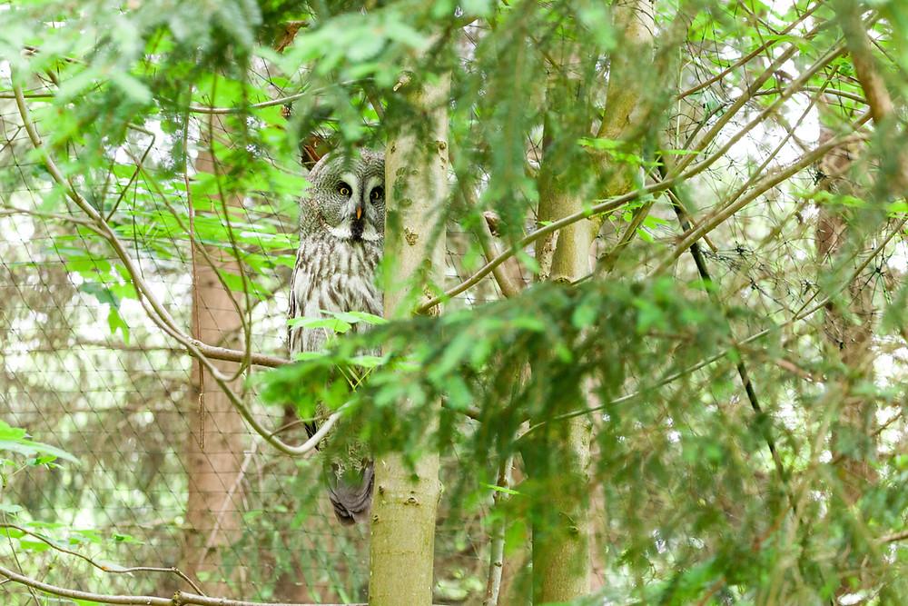 Buchenberg, Naturpark Buchenberg, Tierpark Buchenberg, Naturpark, Tierpark, Mostviertel, Niederösterreich, Ausflug, Naturerlebnis, heimische Wildtiere, Haustiere