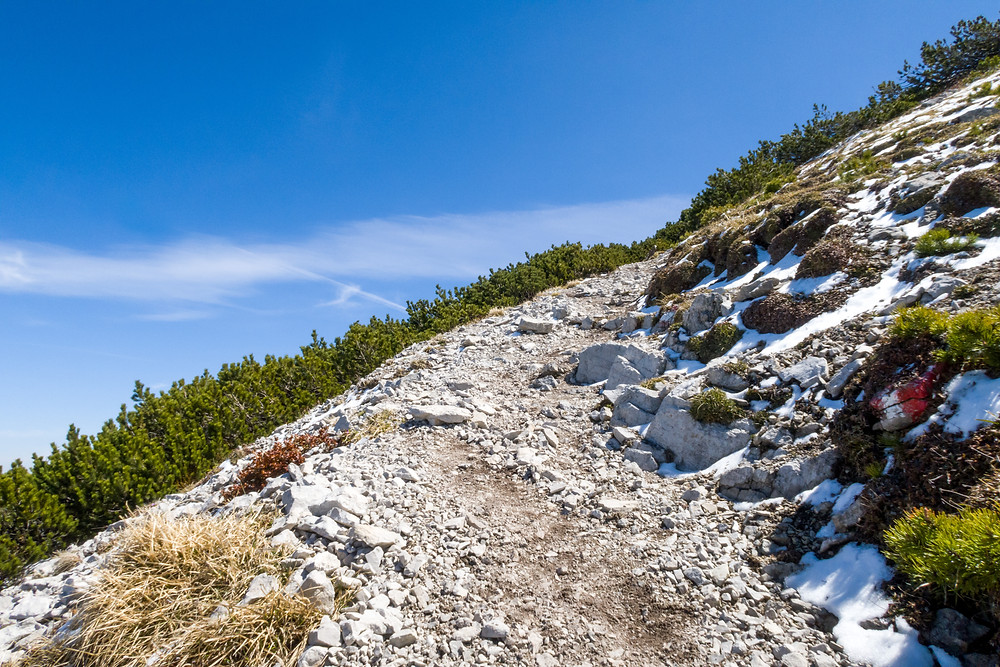 Latschen, Göller, Mostviertel, Alpen, Niederösterreich, Wandern, Bergtour, Wandertipp, Bergwandern