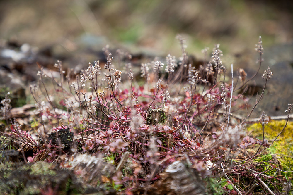 Makroaufnahme, Detailfotografie, Großaufnahme, Pflanze, Blume