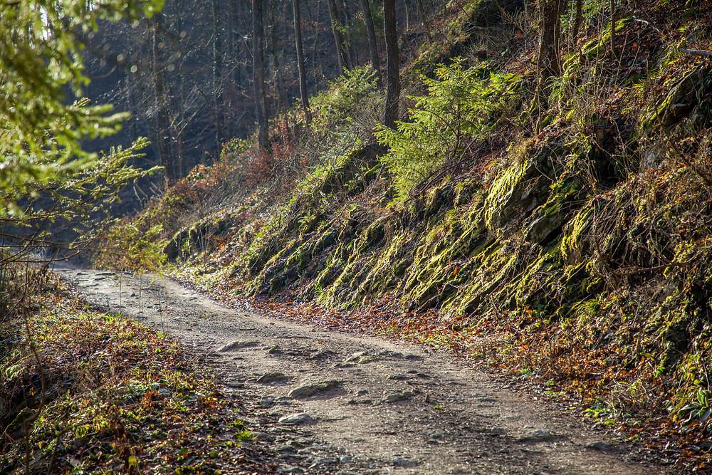 Waldweg, Rotes Tor, Wachau, Niederösterreich, Wandern, Wanderung, Wanderweg