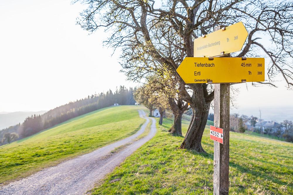 Wandern, Wanderung, Mostviertel, Niederösterreich, Wiese