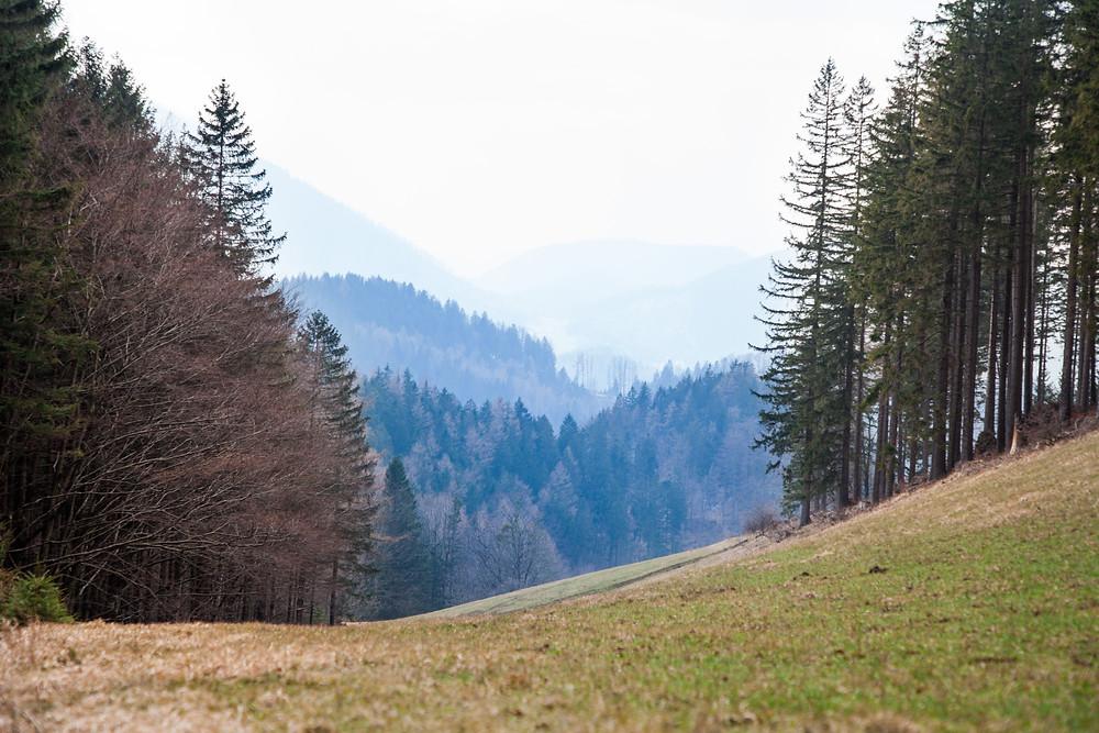 Ausblick, Landschaftsbild, Wald, Hohenstein, Pielachtal, Mostviertel, Niederösterreich, Wandern, Wanderung, Bergwandern