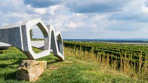 Wandern Weinviertel: Feuersbrunn - Kellergasse - Weinberge - Engabrunner Warte in Niederösterreich