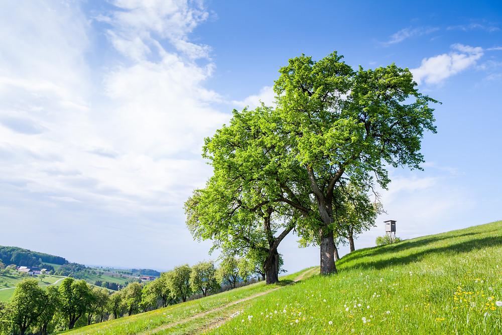 Mostviertel, Niederösterreich, Wandern, Ausflug, Wandertipp, Hochstand, Ansitz