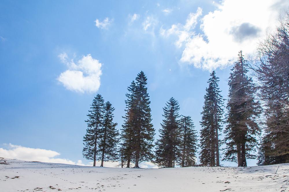 Hinteralm, Kleinzeller Hinteralm, Gutensteiner Alpen, Alpenvorland, Schindeltal, Niederösterreich, Wandern, Wanderung, Bergwandern, Alm, Winterwandern