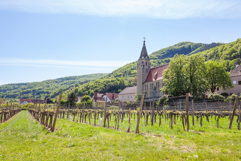 Schwallenbach, Wachau, Niederösterreich, Donau, Kirche, Wandern, Ausflug, Weinreben, Weingärten