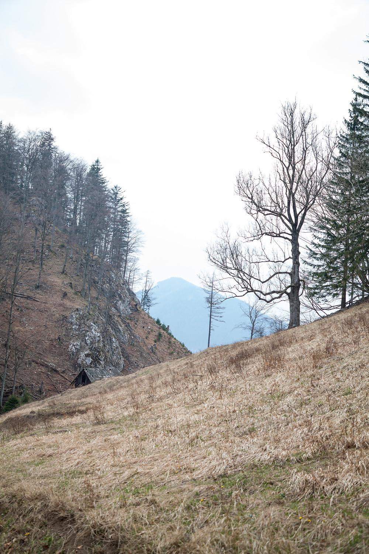 Ausblick, Einsamkeit, Hohenstein, Pielachtal, Mostviertel, Niederösterreich, Wandern, Wanderung, Bergwandern