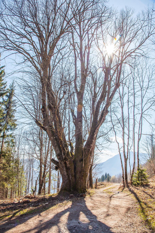 Frühling, Lehenrotte, Lilienfeld, Voralpen, Niederösterreich, Wandern, Wanderung, einfache Wanderung