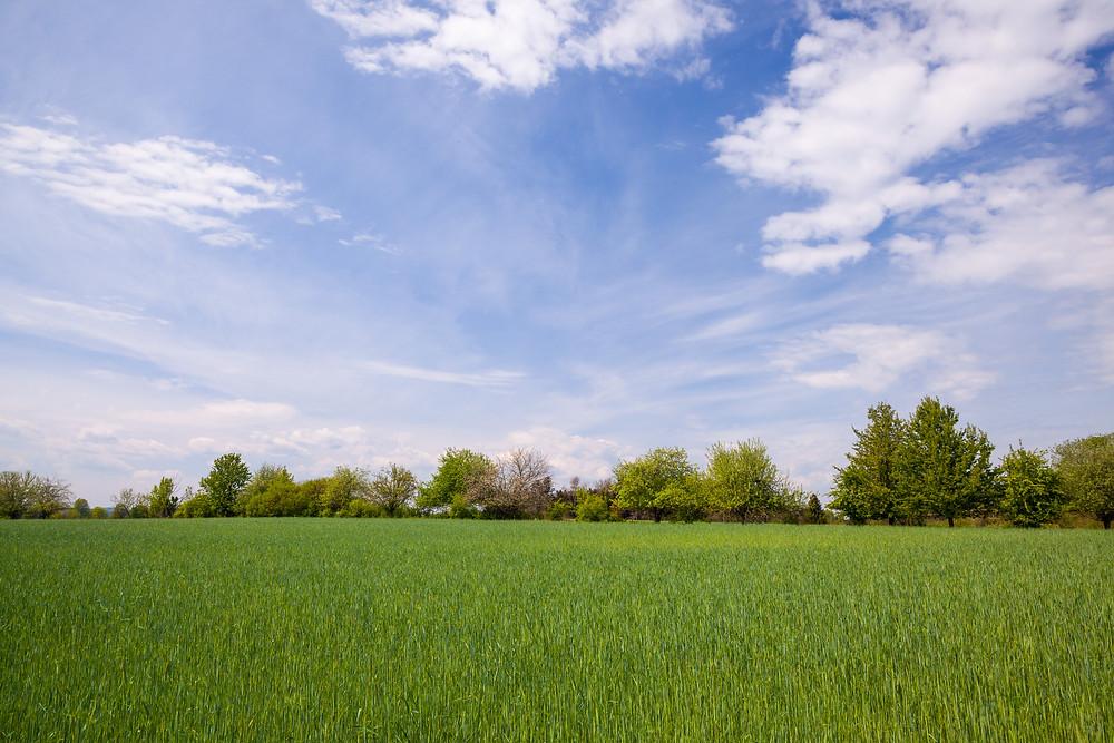 Feld, Feldfrüchte, Saat, Baumallee, Allee, Schloss Waldreichs, Wandern, Wandertipp, Rundwanderung, Ausflug, Teiche, Waldviertel, Niederösterreich