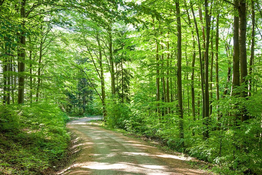 Forstweg, Hafnerberg, Klein Mariazell, Via Sacra, Wallfahrt, Wienerwald, Niederösterreich, 3-Kirchen-Wanderung, Wandern, Ausflug, Wandertipp