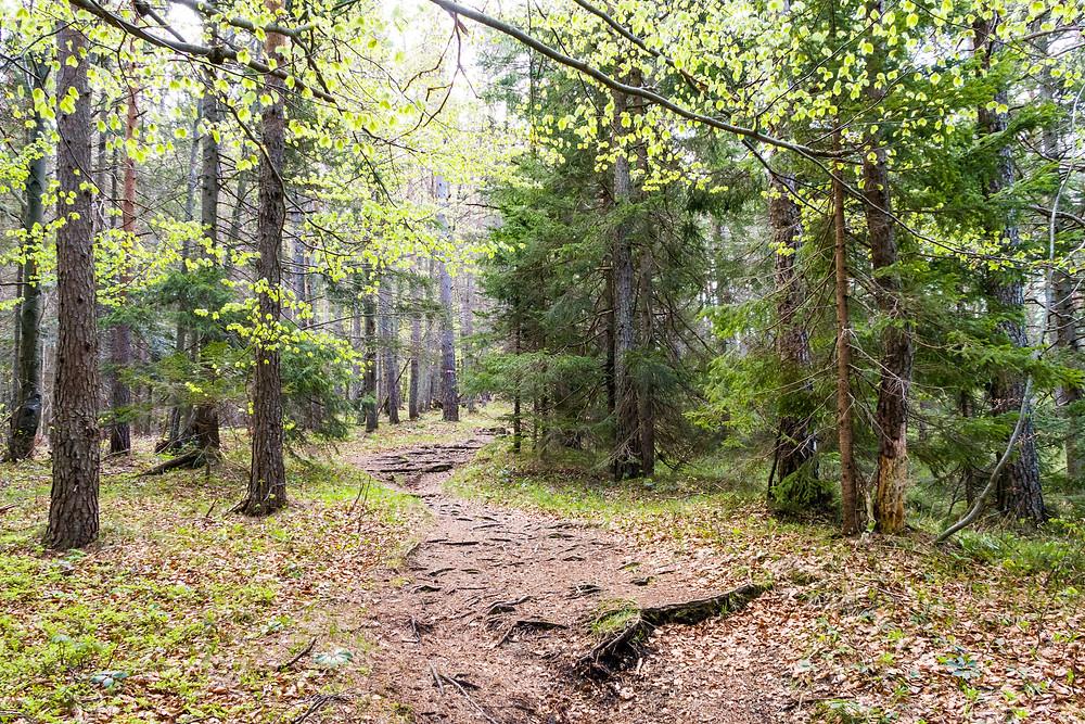 Waldweg, Göller, Mostviertel, Niederösterreich, Wandern, Bergwandern, Bergtour