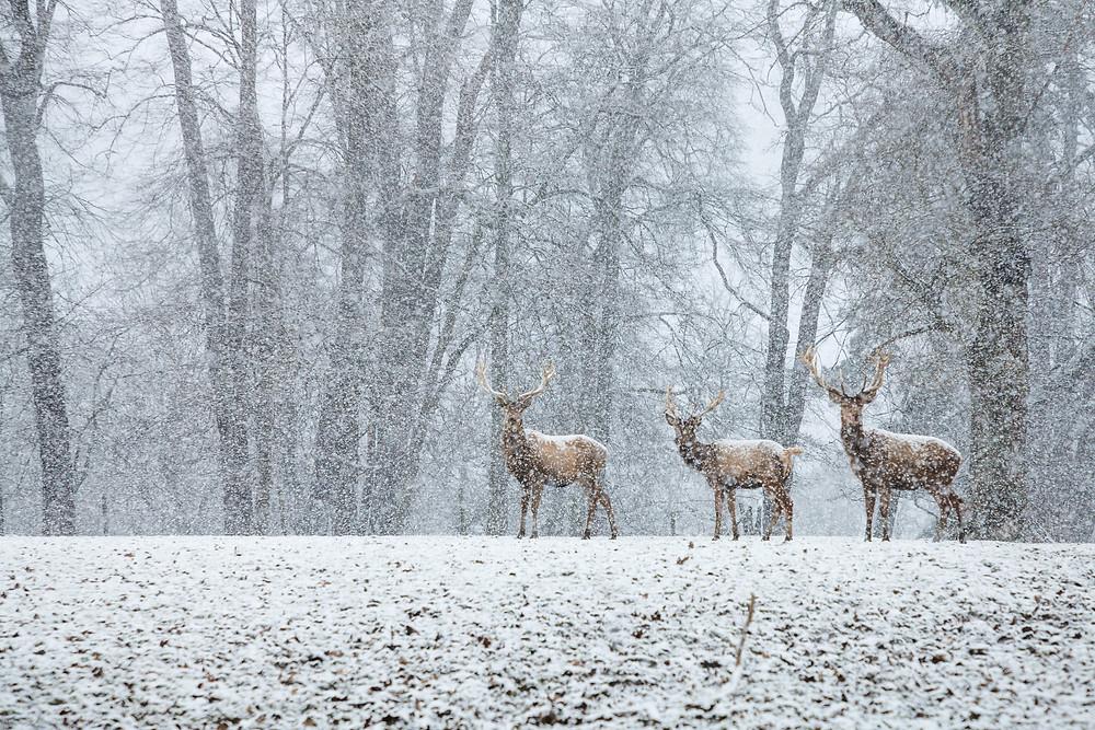 Tierpark Haag, Tierpark Stadt Haag, Tierpark, Mostviertel, NIederösterreich, Ausflug, ganzjährig, Niederösterreich-Card, Tiere, Wildtiere, Ausflugsziel, Erlebniswelt, Tiergarten, Hirsch