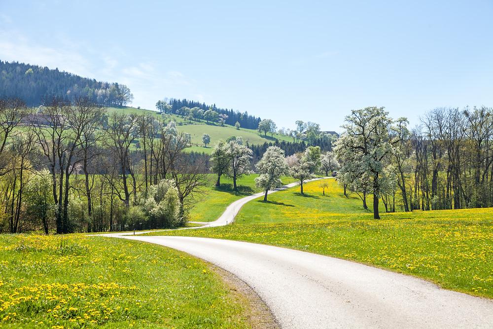 Mostviertel, Mostbirnbaumblüte, Mostbirnbaum, Niederösterreich, Baumblüte, Mostobstwanderweg, Seitenstetten, Wandern, Ausflug, Wandertipp