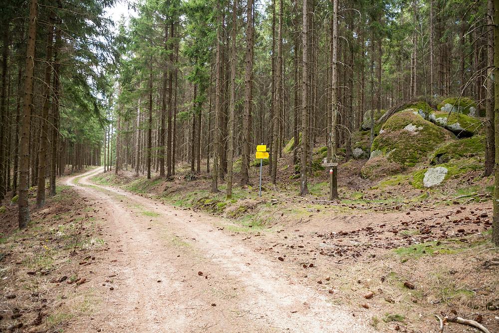 Wanderweg, Waldweg, Forststraße