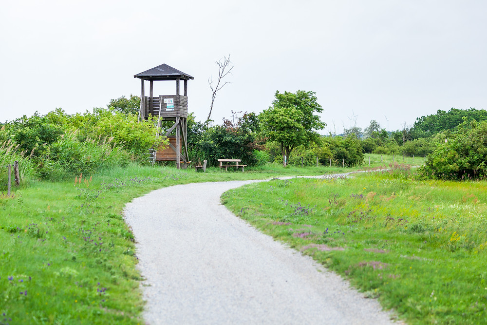 Birdwatching, Vogelbeobachtung, Podersdorf, Neusiedler See, Neusiedlersee, Burgenland, Urlaub, Kurzurlaub, Reise, Radurlaub, Radfahren, Radrunde, Radtour