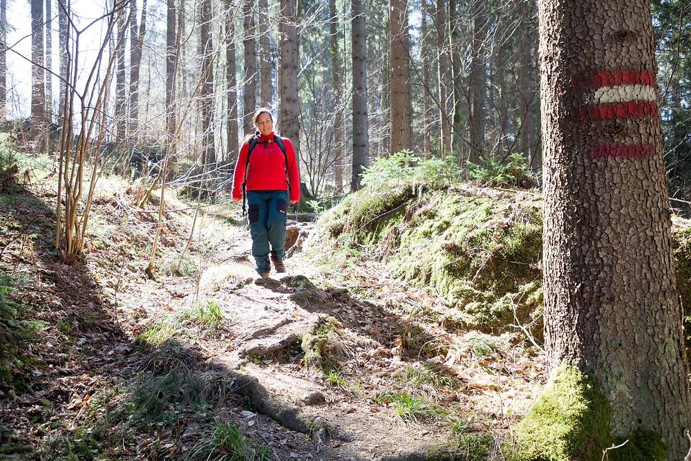 Kamp, Kamptal, Rappottenstein, Waldweg, Steig, Waldviertel, Niederösterreich, Wandern, Wanderung, Wanderin