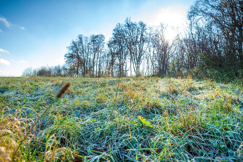 Wienerwald, Niederösterreich, Wandern, Wanderung, Ausflug, Wald, Rundwanderung, Wanderurlaub, Wanderreise, Frost