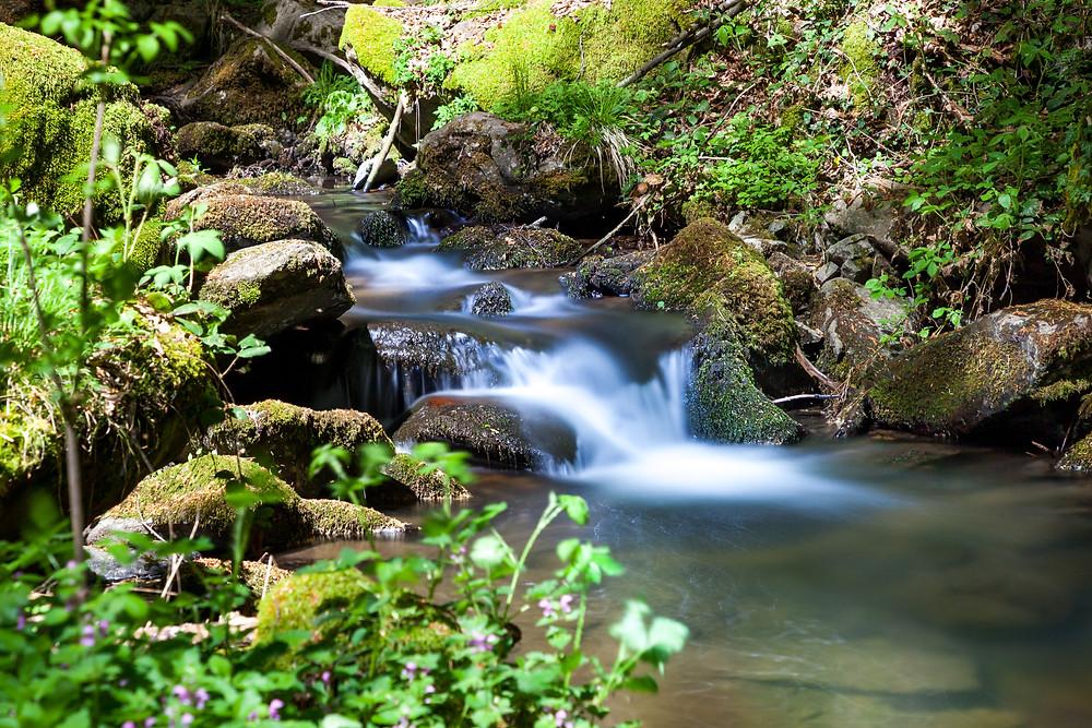 Wasser, Bachlauf, Waldbach, Wildbach, Steinbachklamm, Nibelungengau, Waldviertel, Donau, Niederösterreich, Wandern, Ausflug, Wandertipp