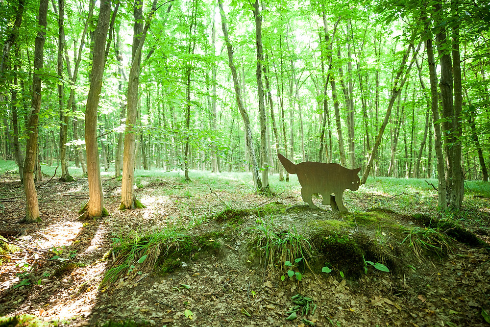 Wildkatzenweg, Einsiedlerweg, Nationalpark Thayatal, Thaya, Thayatal, Waldviertel, Niederösterreich, Naturpark, wandern, Wanderung, Ausflug, Hardegg