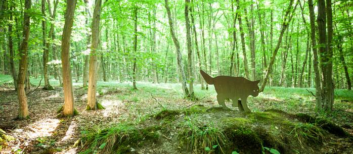 Wandern Einsiedlerweg - Wildkatzenweg im Nationalpark Thayatal, Waldviertel