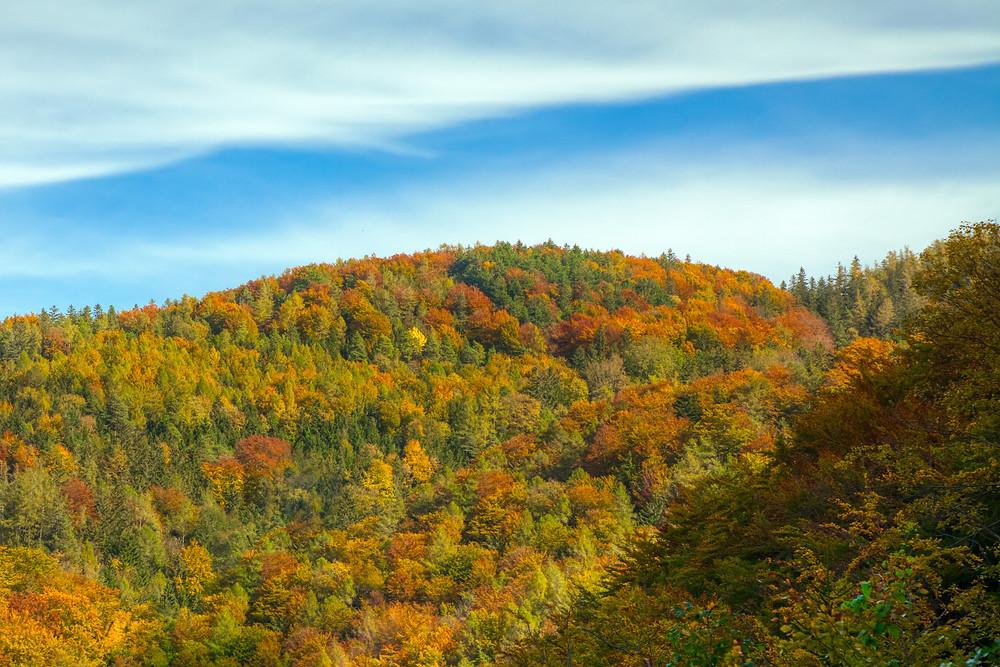 Herbst, Herbstwald, Niederösterreich, Mostviertel, wandern, Wanderung