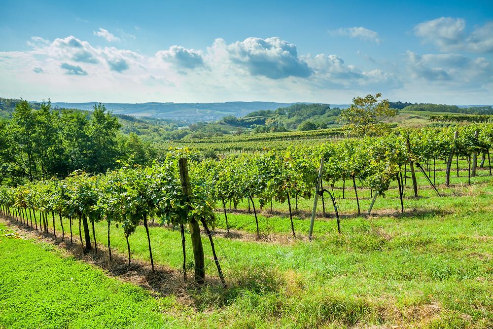 Wandern, Weinviertel, Niederösterreich, Wanderung, Weingärten, Weinberg