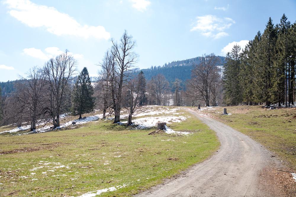 Hinteralm, Kleinzeller Hinteralm, Gutensteiner Alpen, Alpenvorland, Schindeltal, Niederösterreich, Wandern, Wanderung, Bergwandern, Alm