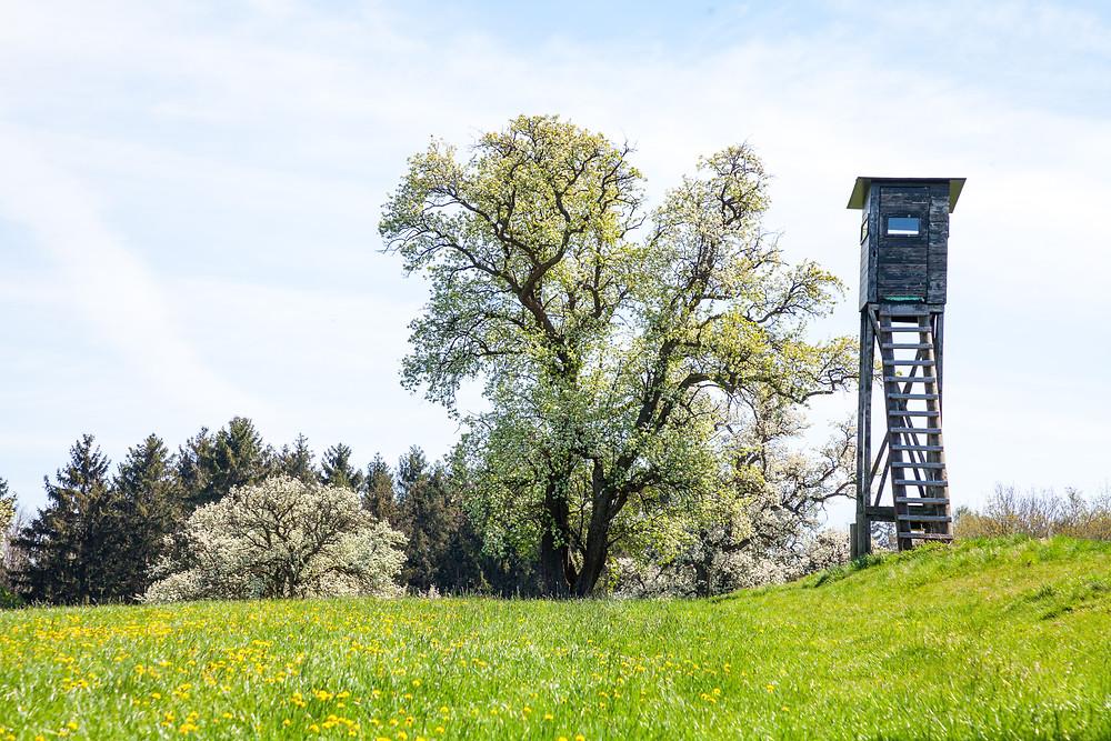 Mostviertel, Niederösterreich, Mostbirnbaum, Birnbaum, Birnbaumblüte, wandern, Wanderung, Wanderurlaub, Wanderreise, Urlaub, Mostobstweg, Stift Seitenstetten