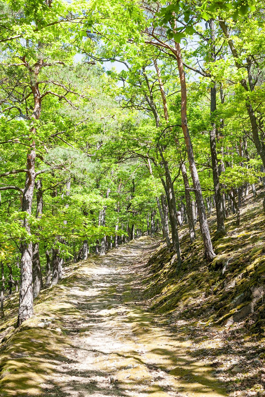 Eichenwald, Dürnstein, Wachau, Niederösterreich, Donau, Donautal, Wandern, Ausflug, Wandertipp
