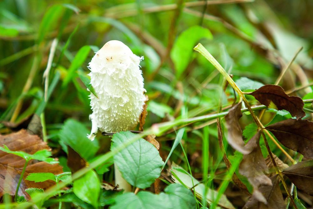 Schwammerl, Pilz, Pilze, Wald, Waldpilz, Niederösterreich
