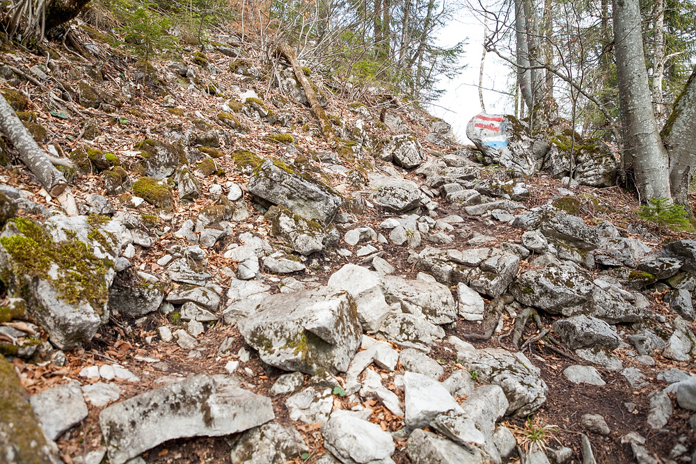 Hohenstein, Pielachtal, Mostviertel, Niederösterreich, Wandern, Wanderung, Bergwanderin, Steig
