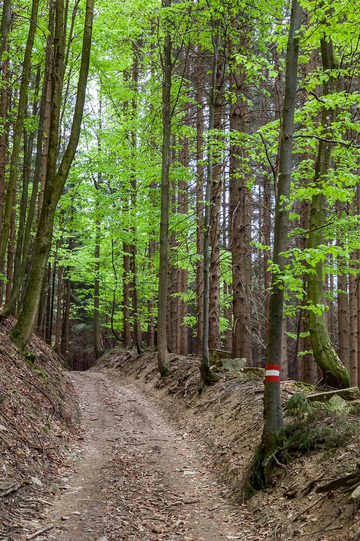 Waldweg, Buchen, Wald, Wandern, Mostviertel, Niederösterreich