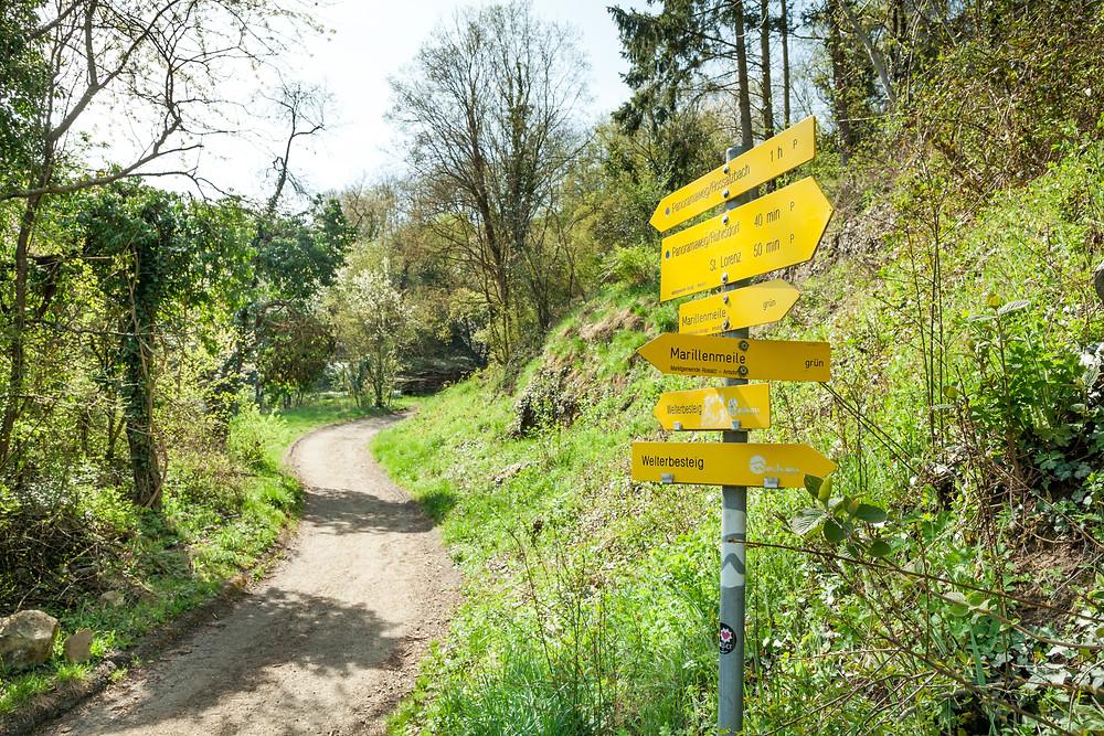 Wachau, Niederösterreich, wandern, Rossatz, Rührsdorf, Wildschweingraben, Panoramaweg, Donau, Donautal, Rundwanderung, Wandertipp, Wanderurlaub, Wanderreise, Urlaub