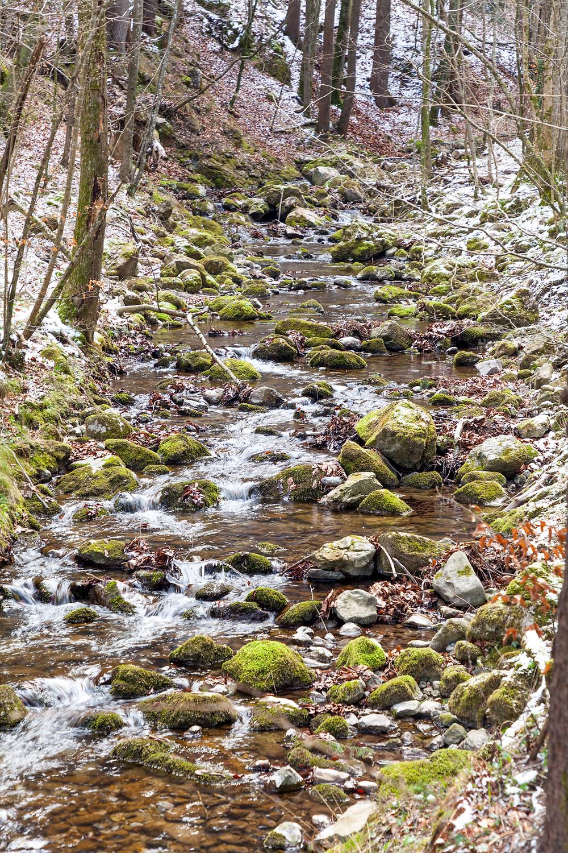 Bach, Bachlauf, Gewässer, Wald, Moos