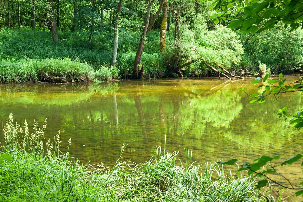 Nationalpark Thayatal, Thayatal, Nationalpark, NP Thayatal, Thaya, Waldviertel, wandern, Wanderung, Ausflug, Niederösterreich