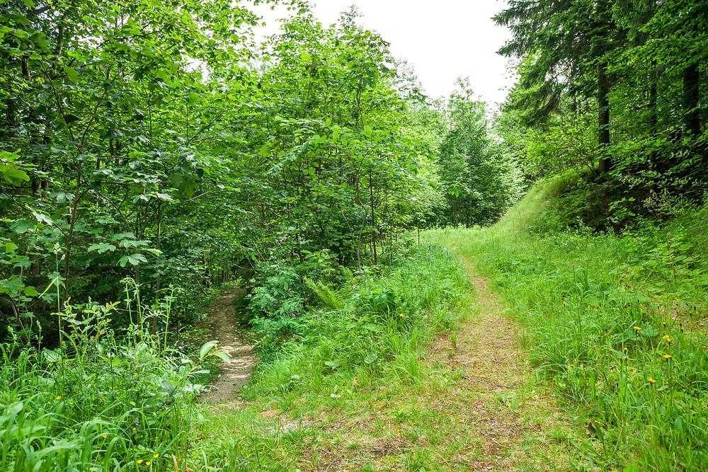 Annaberg, Annahm, Hennesteck, wandern, Wanderung, Ausflug, Niederösterreich, Mostviertel
