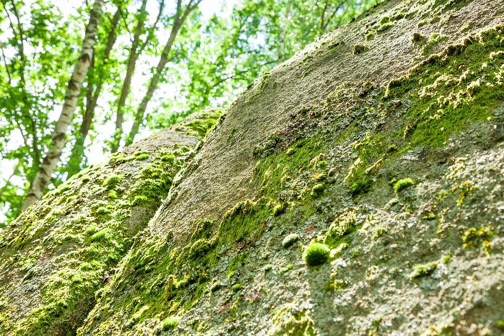 Pilzstein, Blockheide, Wackelsteine, Granit, Felsformationen, Gmünd, Waldviertel, Niederösterreich, Wandern, Wanderung, Ausflug, Naturpark, Naturdenkmal